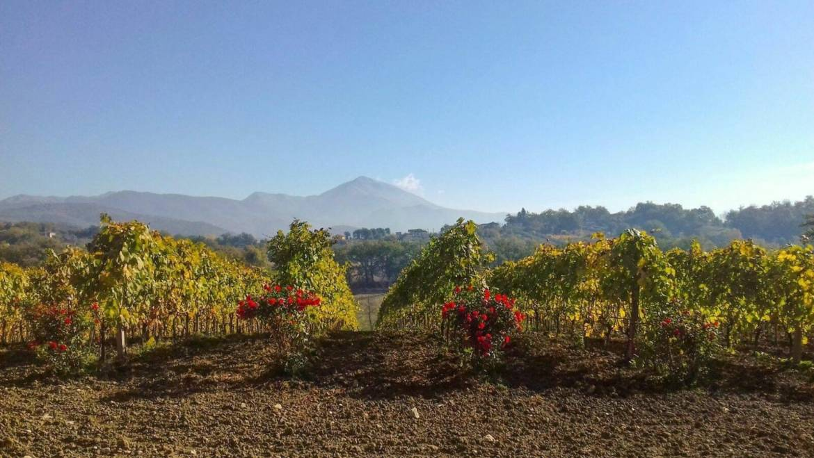 Wine Tour and Lunch at our Vineyard, Winery and Restaurant Near Rome From € 35
