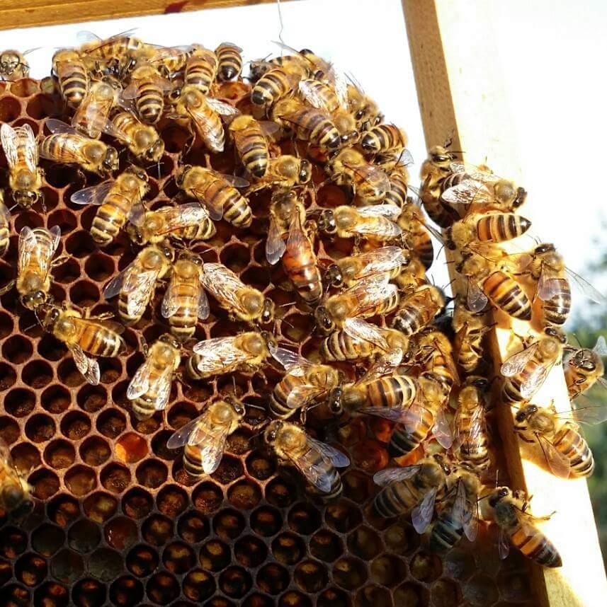 Beekeeping in Italy